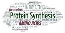 Cell Free Protein Synthesis